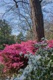 Πάρκο του Fred Fletcher το Μάρτιο στοκ εικόνες