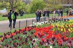 Πάρκο του ST James Στοκ Εικόνα
