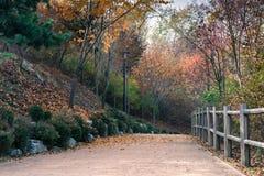 Πάρκο το φθινόπωρο Στοκ εικόνα με δικαίωμα ελεύθερης χρήσης