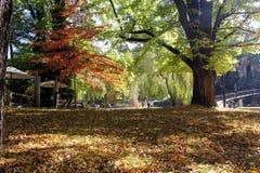 Πάρκο το φθινόπωρο Στοκ φωτογραφία με δικαίωμα ελεύθερης χρήσης