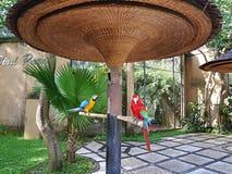 Πάρκο των πουλιών και των ερπετών στο Μπαλί, ara παπαγάλων Στοκ Εικόνα