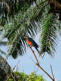 Πάρκο των πουλιών και των ερπετών στο Μπαλί, ara παπαγάλων Στοκ φωτογραφία με δικαίωμα ελεύθερης χρήσης