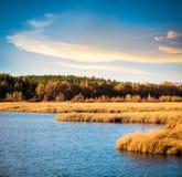 Πάρκο υγρότοπου το φθινόπωρο Στοκ Φωτογραφία