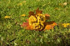 Πάρκο φθινοπώρου, ανθοδέσμη των τριαντάφυλλων που γίνονται από τα πεσμένα φύλλα σφενδάμου, επάνω Στοκ Φωτογραφίες