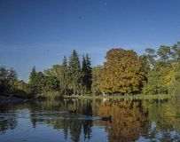 Πάρκο φθινοπώρου, αντανάκλαση των δέντρων στο νερό, πάπιες ροής στοκ εικόνα