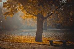 Πάρκο φθινοπώρου Πάγκος κάτω από το κίτρινο δέντρο σφενδάμνου Στοκ Εικόνες