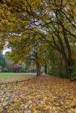 Πάρκο φθινοπώρου στο Βερολίνο Στοκ φωτογραφίες με δικαίωμα ελεύθερης χρήσης