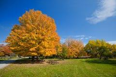 πάρκο φθινοπώρου Στοκ εικόνα με δικαίωμα ελεύθερης χρήσης