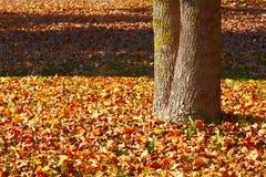 πάρκο φθινοπώρου Στοκ Εικόνα