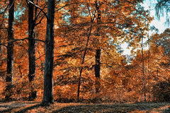 Πάρκο φθινοπώρου στοκ φωτογραφίες με δικαίωμα ελεύθερης χρήσης