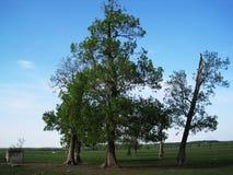 Πάρκο φύσης - τομέας Lonj στοκ εικόνες με δικαίωμα ελεύθερης χρήσης