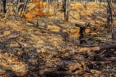 Πάρκο φύσης του Martin το φθινόπωρο Στοκ φωτογραφίες με δικαίωμα ελεύθερης χρήσης