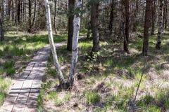 Πάρκο φύσης Στοκ Εικόνες