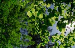 Πάρκο, φύση Στοκ Φωτογραφίες