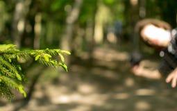 Πάρκο, φύση Στοκ Εικόνα