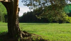 Πάρκο, φύση Στοκ Εικόνες