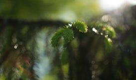 Πάρκο, φύση Στοκ εικόνες με δικαίωμα ελεύθερης χρήσης