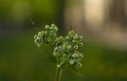 Πάρκο, φύση Στοκ φωτογραφίες με δικαίωμα ελεύθερης χρήσης
