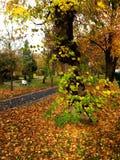 πάρκο φύλλων φθινοπώρου Στοκ εικόνα με δικαίωμα ελεύθερης χρήσης