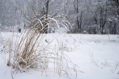 πάρκο χιονώδες Στοκ Εικόνες