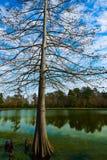 Πάρκο Χιούστον Τέξας Burroughs Tomball Στοκ Εικόνες