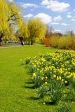 πάρκο 2 daffs Στοκ φωτογραφία με δικαίωμα ελεύθερης χρήσης