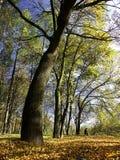 πάρκο στοκ φωτογραφία