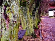 Πάρκο Στοκ Εικόνες