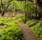 Πάρκο Aros Στοκ φωτογραφία με δικαίωμα ελεύθερης χρήσης