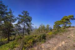 Πάρκο Carmel στοκ εικόνες με δικαίωμα ελεύθερης χρήσης