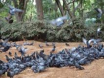 Πάρκο Cubbon Στοκ φωτογραφία με δικαίωμα ελεύθερης χρήσης