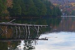 Πάρκο Gatineau Στοκ Εικόνες