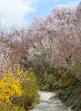 Πάρκο Hanamiyama (βουνό των λουλουδιών), Φουκουσίμα, Ιαπωνία Στοκ Εικόνα