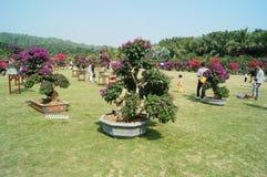 Πάρκο Hill Lotus Shenzhen Στοκ Εικόνες