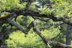 Πάρκο Livadia, Κριμαία Στοκ Φωτογραφίες