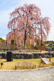 Πάρκο Maruyama στο Κιότο Στοκ φωτογραφία με δικαίωμα ελεύθερης χρήσης