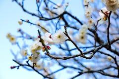 Πάρκο Naritasan Στοκ φωτογραφίες με δικαίωμα ελεύθερης χρήσης