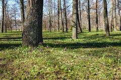 πάρκο peterhof στοκ εικόνες