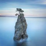 Πάρκο Portofino Απότομος βράχος βράχου δέντρων πεύκων exposure long Λιγυρία, αυτό Στοκ εικόνα με δικαίωμα ελεύθερης χρήσης