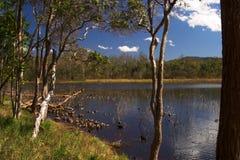 Πάρκο Queensland Αυστραλία του Μπρίσμπαν Forrest Στοκ Φωτογραφίες