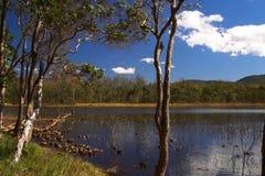 Πάρκο Queensland Αυστραλία του Μπρίσμπαν Forrest Στοκ Εικόνες