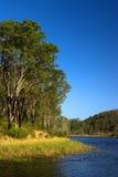 Πάρκο Queensland Αυστραλία του Μπρίσμπαν Forrest Στοκ φωτογραφίες με δικαίωμα ελεύθερης χρήσης