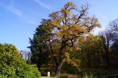 Πάρκο, rhododendron και βαλανιδιά φθινοπώρου στοκ εικόνες με δικαίωμα ελεύθερης χρήσης