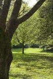 πάρκο Stanley Βανκούβερ στοκ εικόνα με δικαίωμα ελεύθερης χρήσης