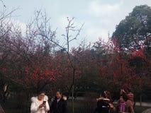 Πάρκο Tonghua στοκ φωτογραφίες με δικαίωμα ελεύθερης χρήσης