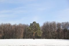 Πάρκο ` Tsaritsyno ` Στοκ Εικόνες