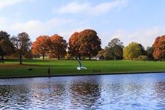 Πάρκο Verlamium, UK Στοκ Εικόνα