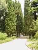 Πάρκο Yew στο πάρκο Στοκ φωτογραφία με δικαίωμα ελεύθερης χρήσης