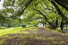 Πάρκο Yoyogi στο Τόκιο Στοκ φωτογραφία με δικαίωμα ελεύθερης χρήσης