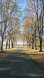 Πάροδος δέντρων Στοκ εικόνα με δικαίωμα ελεύθερης χρήσης